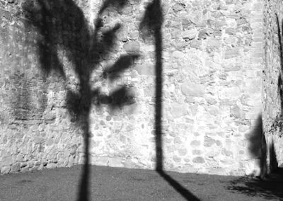 Burd Photo #1 AncientWall&Palm