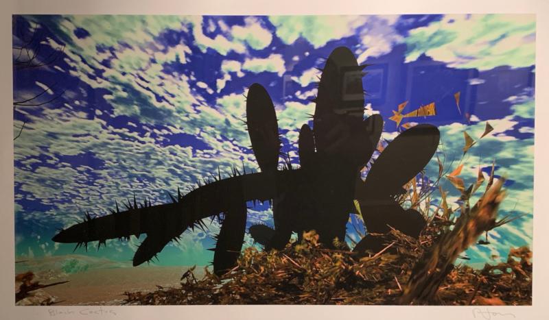black-cactus